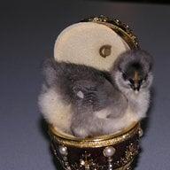 chicks4uandme