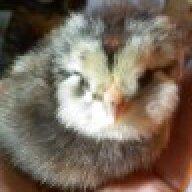 Karrie13