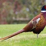 pheasantfeeder