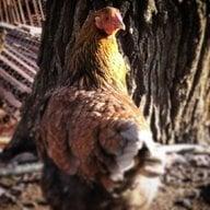 chickbrad24