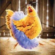 Chick-N-Fun