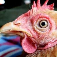 quackshack74