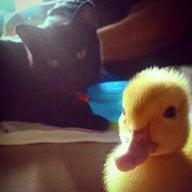Quackers Mama