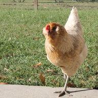 ChickenNerd007