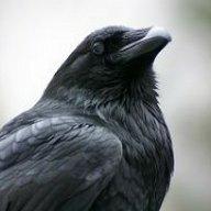 RavensRansom