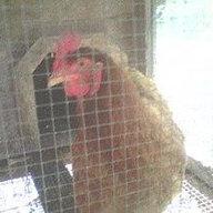 chicksmama6