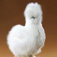 Chickenking11