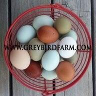 Grey Bird Farm