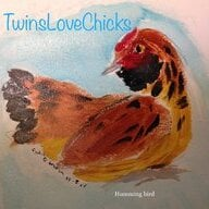TwinsLoveChicks