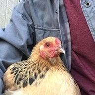 Flock Master64