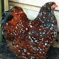 Chickadee1982