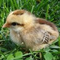 LittleBird123