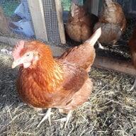 Chick2chicken