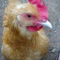chickiemom81
