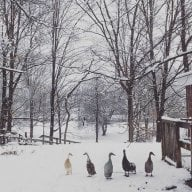 Niche Flock
