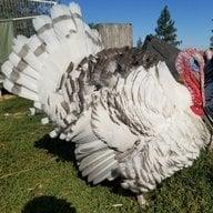 TurkeyTimes