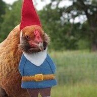 Chickassan