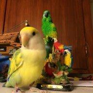 Ashlee the bird newb