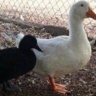 PoultryLand