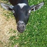 goatsnchickens77