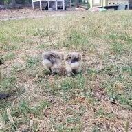 Squishychicken