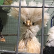ChickenGirl555