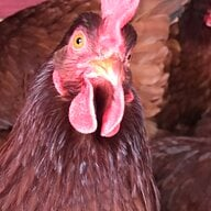 love4mychickens