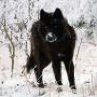 Wolf-Kim