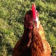 ChickenCrazyAnnie