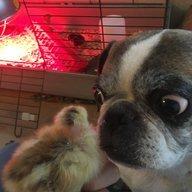 Chickkids321