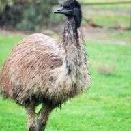 EmuMom
