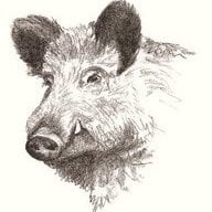 Wild Boar Brewing