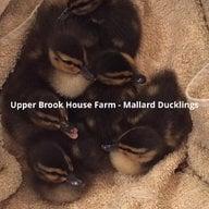 Upper Brook House Farm
