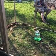 Chickenmama2015