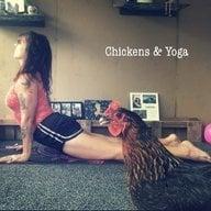 ChickensAndYoga