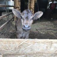 Farmgirl1228