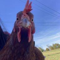 chickchick-chicky