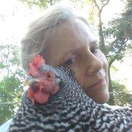 chickensuz