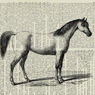 equinehugger3