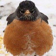 wantmesomebirds2