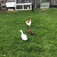 DuckFrenzy247