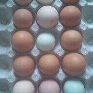Double egg 7