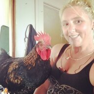 Golden Chicken Master