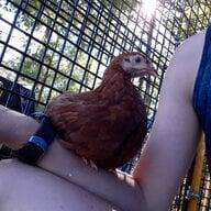 ChickChic00