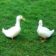 duck lover 27