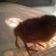 biddybird