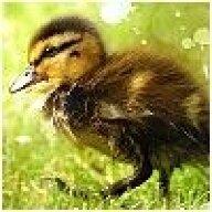 love_a_duck