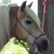horsejody