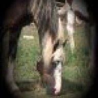 horse_poor
