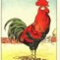 Desert Rooster